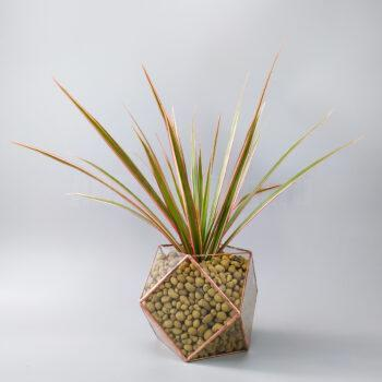 Драцена в кубооктаэдре ваза