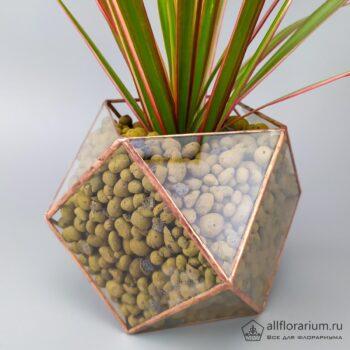 Драцена в кубооктаэдре композиция