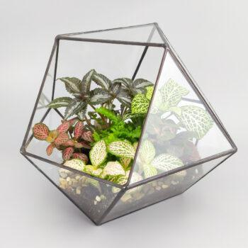Разнообразие в кубооктаэдре флорариум