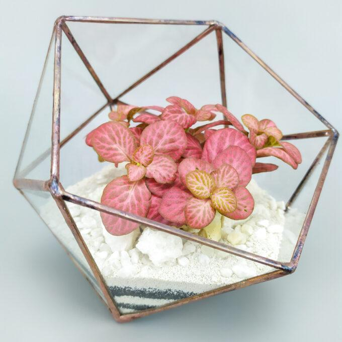 Флорариум с фиттонией композиция