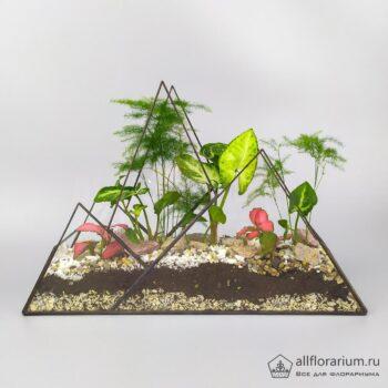 Горная чаща флорариум