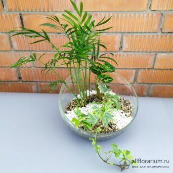 Минималистичная композиция в вазе со срезом флорариум