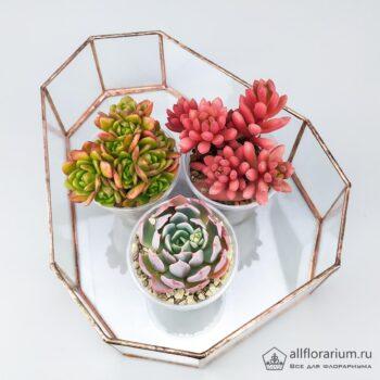 Геометрическая ваза Яйцо плоское открытое с растениями