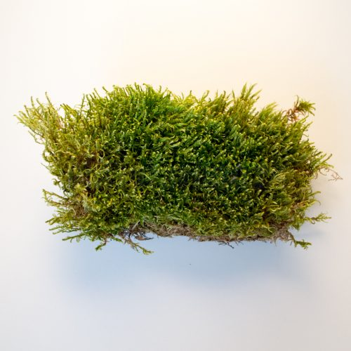 Мох натуральный зеленый Platmos