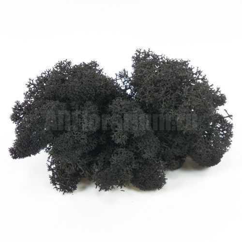 Мох Ягель стабилизированный черный - Все для флорариума