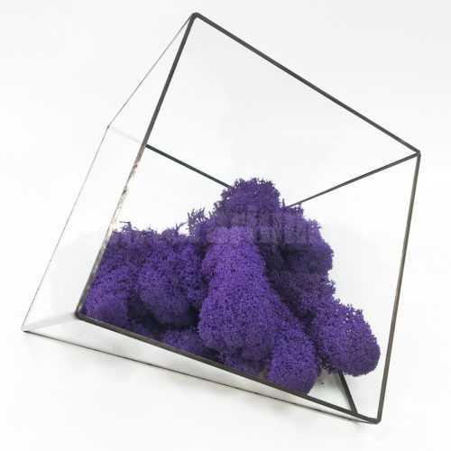 Мох Ягель стабилизированный фиолетовый - Все для флорариума