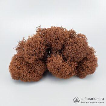 Мох Ягель стабилизированный коричневый (шоколадный)