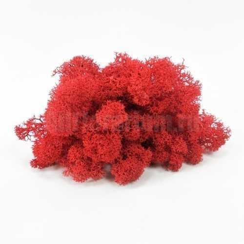 Мох Ягель стабилизированный красный - Все для флорариума