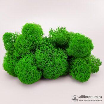 Мох Ягель стабилизированный зелёный