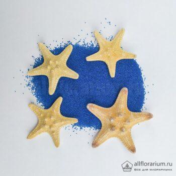 Звезды морские рогатые купить