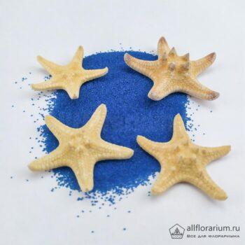 Звезды морские рогатые